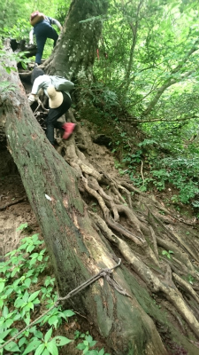 三仏寺投入れ堂への登山道