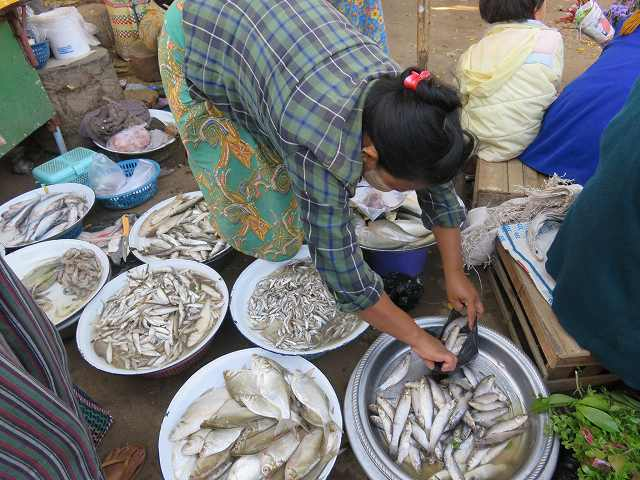 ミャンマーの市場で売っている魚