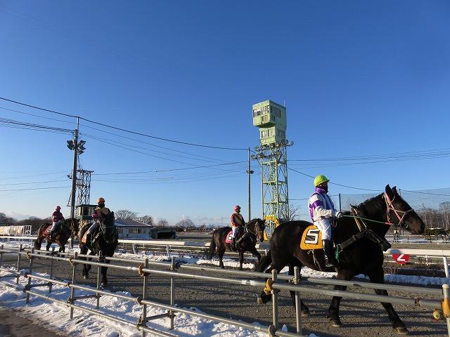 帯広競馬場で、パドックからスタート地点にむかう馬たち