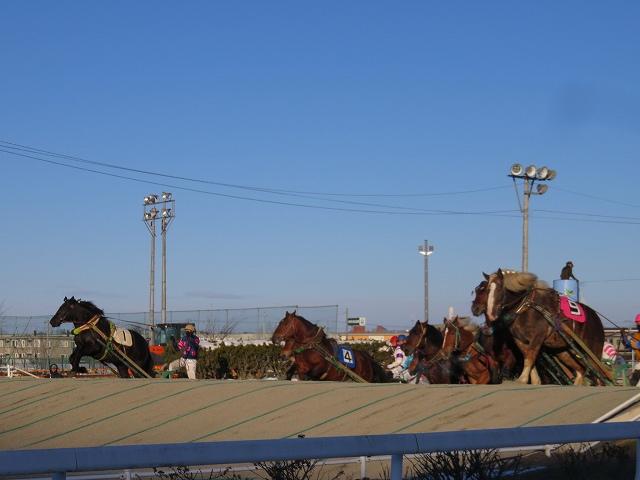 帯広競馬場で、第一障害をこえてくる馬たち