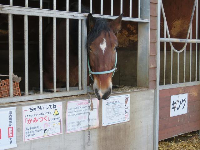 ばんえい帯広競馬場の「ふれあい動物園」にいる馬「キング」