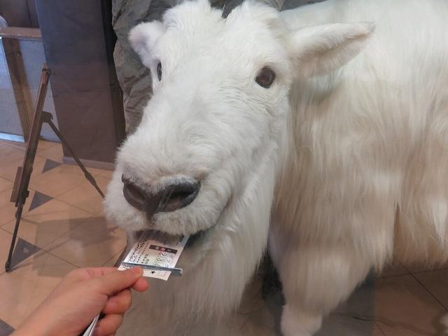 江戸川競艇場のハズレ舟券を食べるヤギ、マッシロー