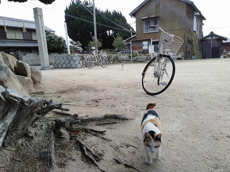本島の「木烏神社」の境内を歩く猫