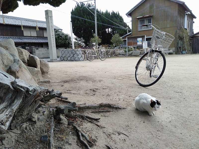 本島の「木烏神社」の境内にいる猫
